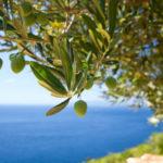 infuso olivo foglie