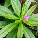 piante adattogene per stanchezza