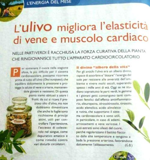 infuso di olivo per cuore